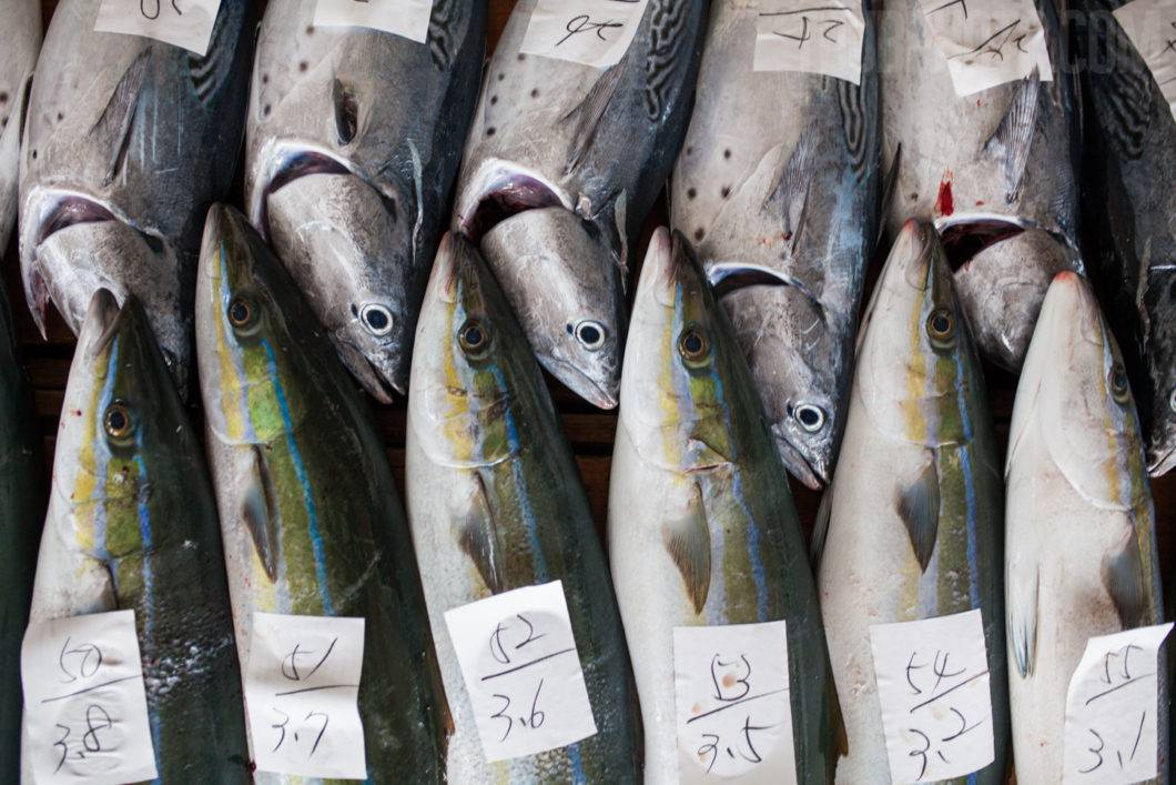 Fish are labeled with weight and number for the auction.