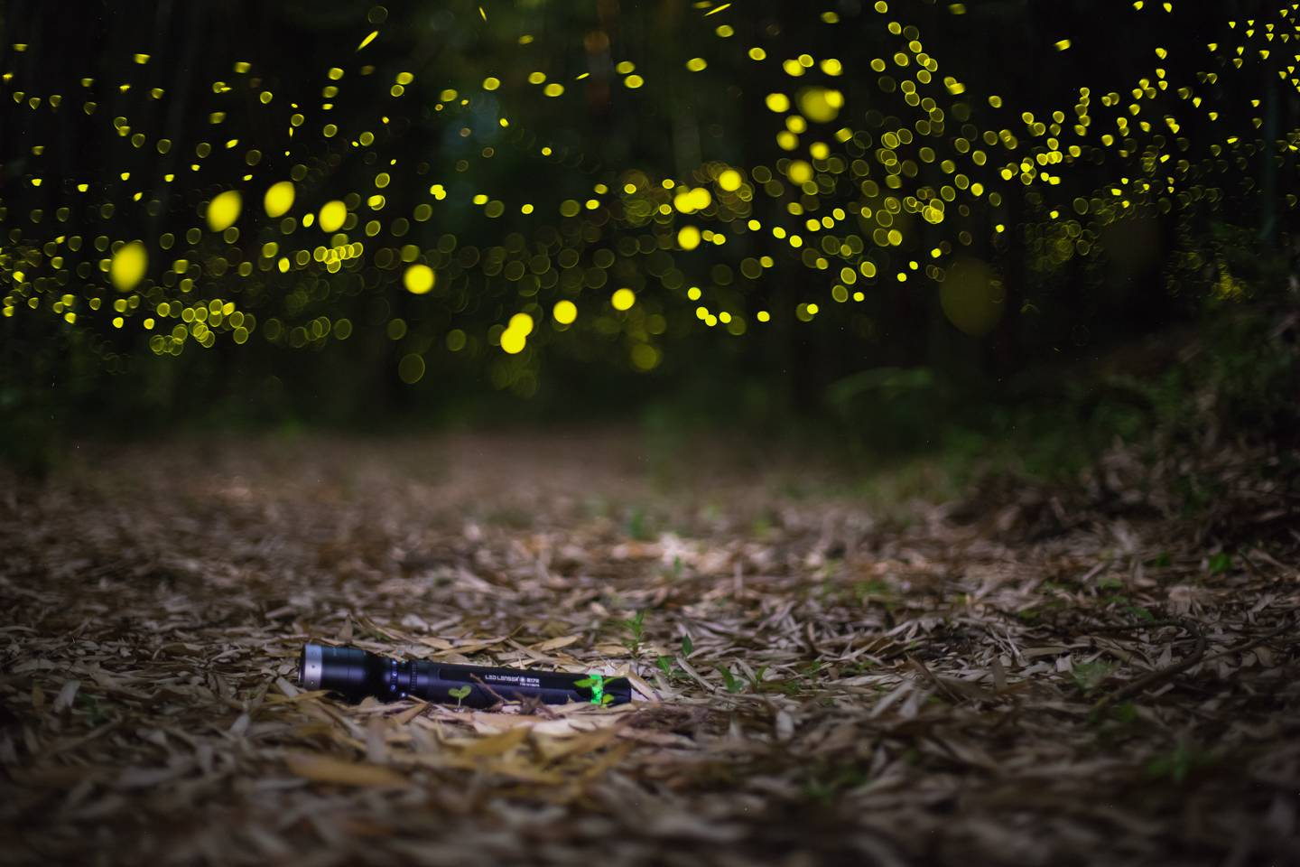LED Lenser fireflies